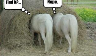 Need in a haystack - blogging