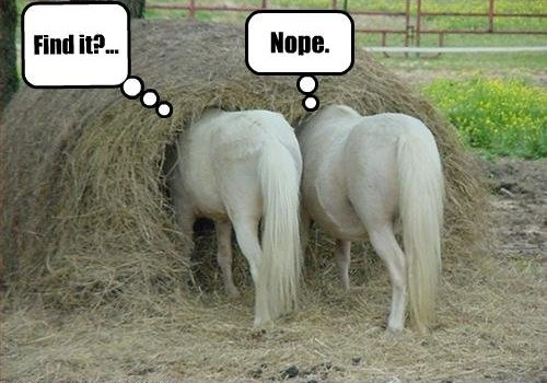 Need in a haystack - blogging